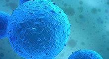 150NHDF(正常人皮肤成纤维细胞)