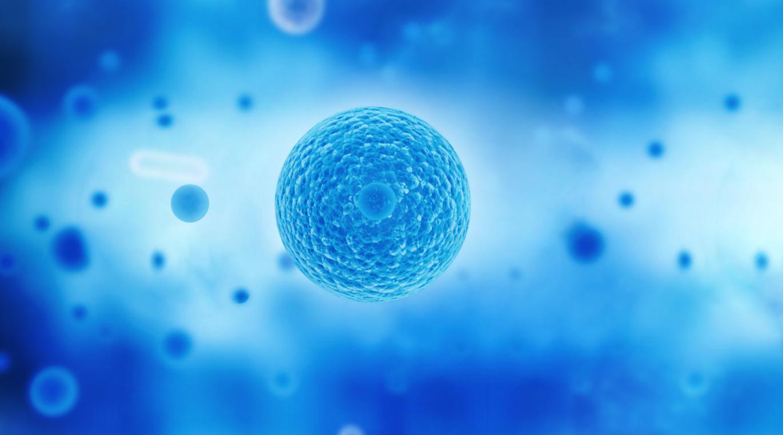干细胞疗法为治疗肝硬化、肝纤维化开辟新路径,4个备案项目获批