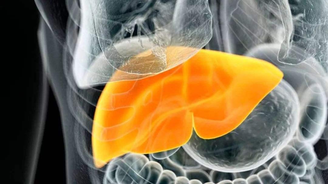 干细胞治疗肝硬化的最新临床进展
