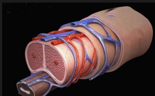 干细胞治疗勃起功能障碍的2项临床研究