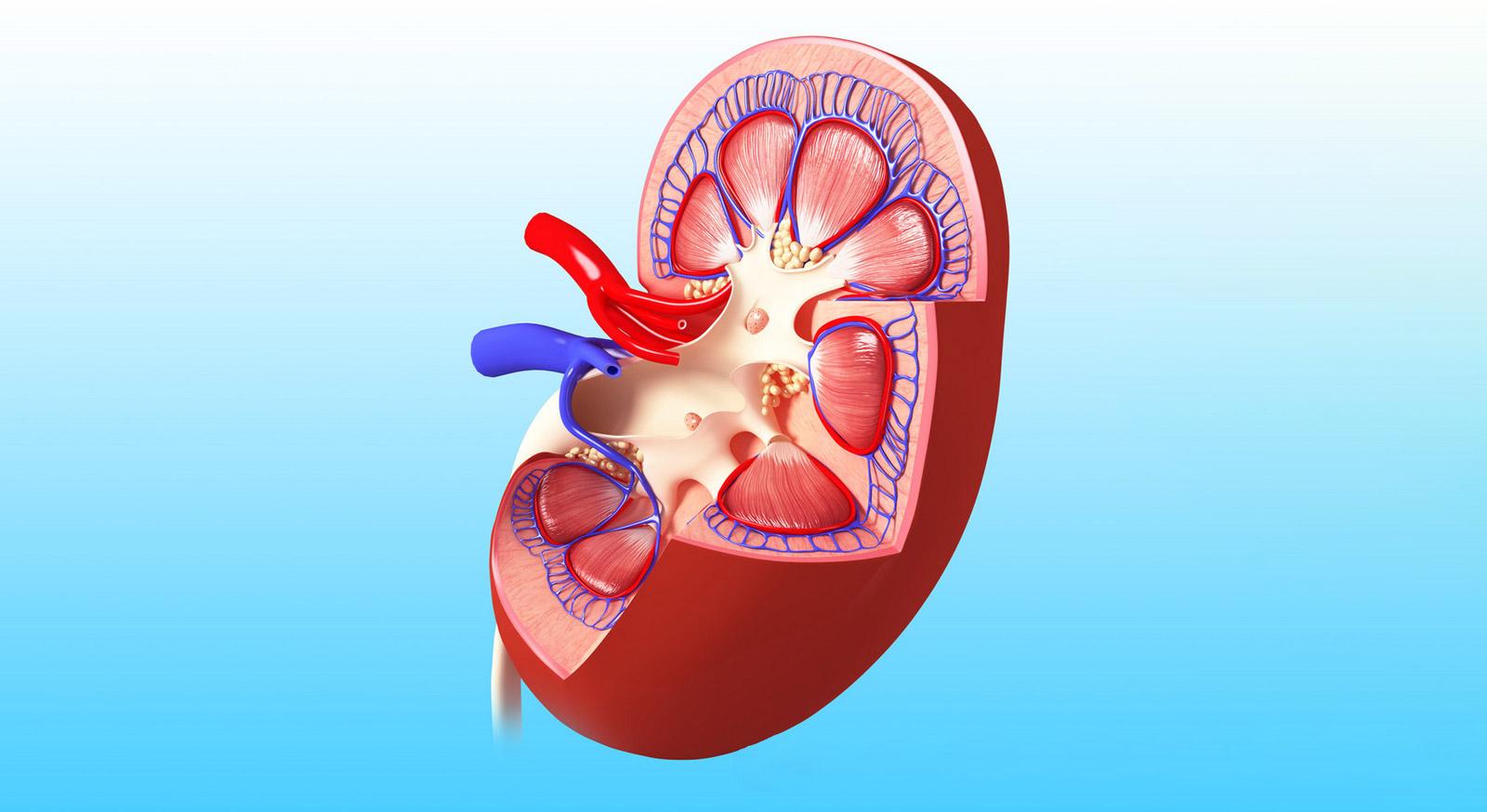 干细胞移植狼疮性肾炎的临床研究与应用