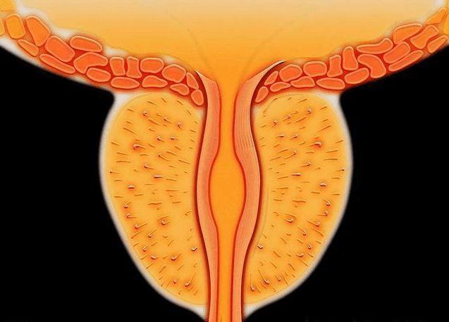 干细胞移植在糖尿病膀胱中的临床应用