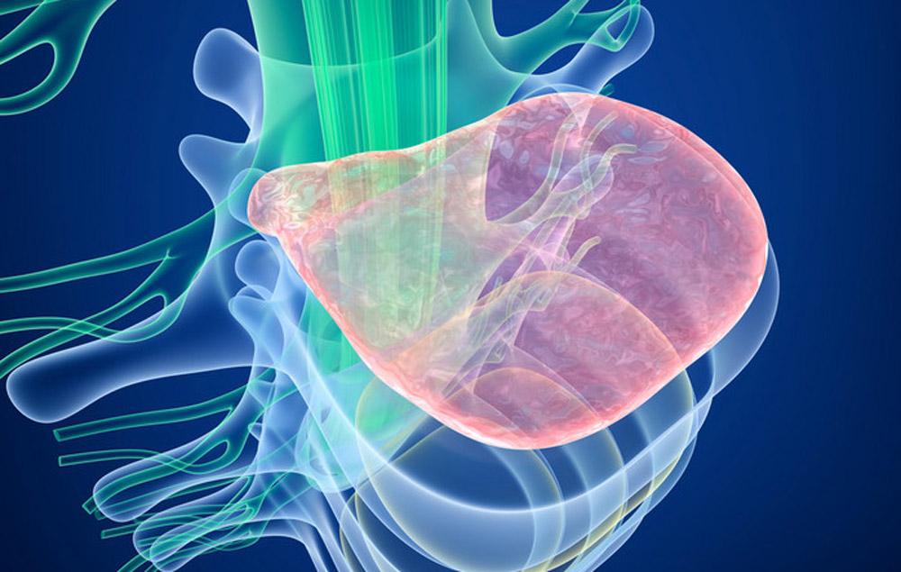 干细胞移植治疗脊髓损伤的新进展